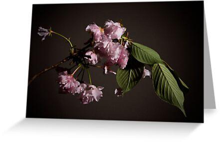 Fleur sur Branche by Gregory Colvin