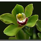 An Orchid in Spring by John44