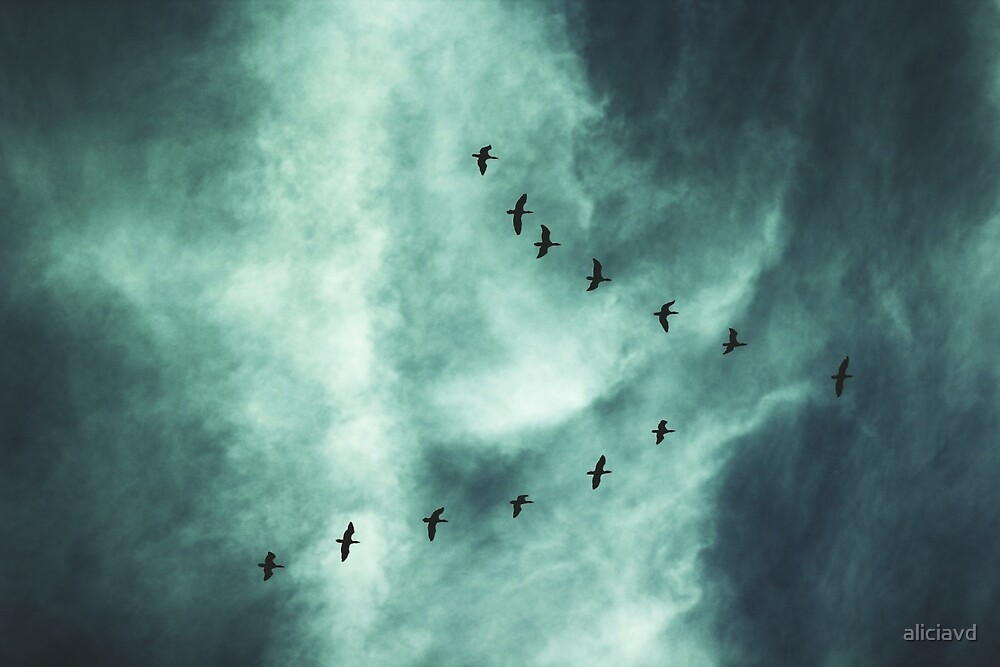 Beautiful Sky with Birds by aliciavd
