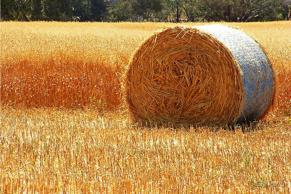 Hay Roll by Eve Parry