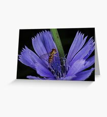 Chicory Chow Down Greeting Card