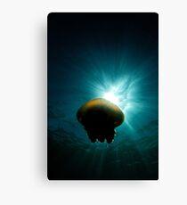 Canon Ball Jellyfish Canvas Print
