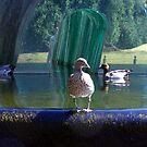duckie! by elizabethrose05