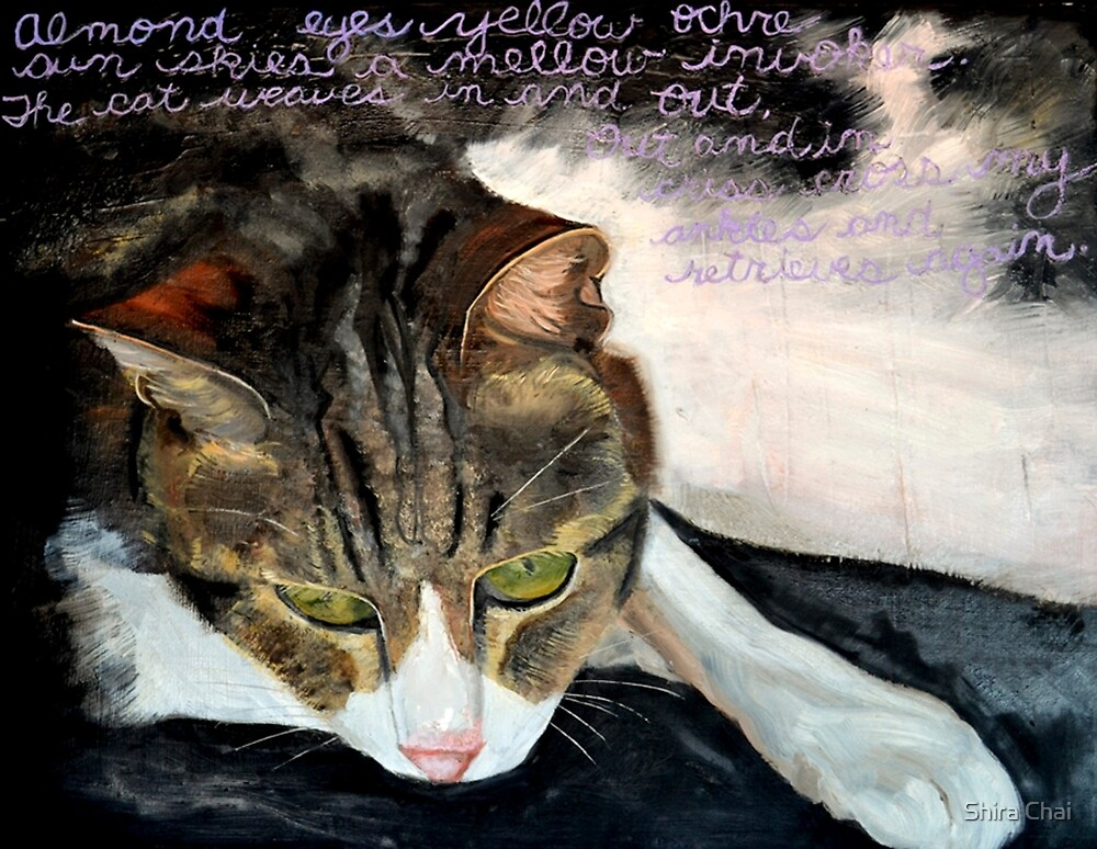 Night, Our Cat by Shira Chai