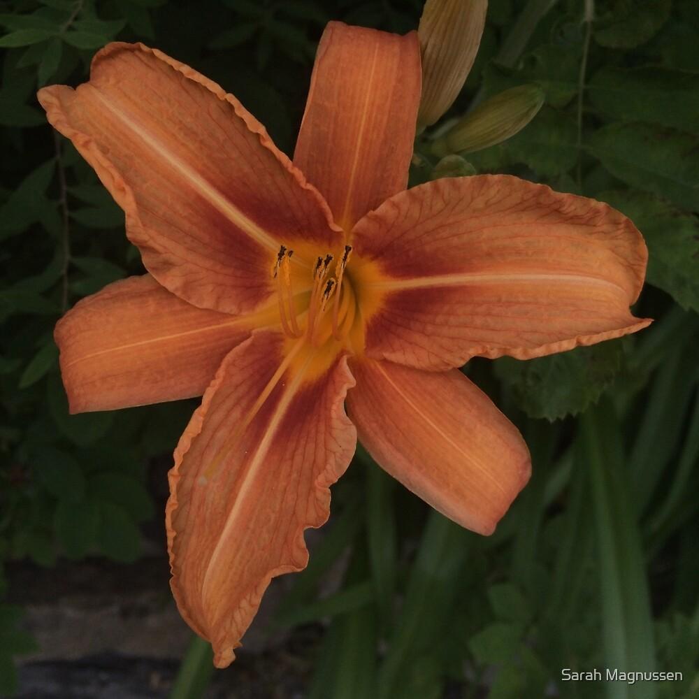 Orange Lily by Sarah Magnussen