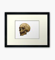 Anatomical Adult Skull Framed Print
