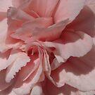 Petals Uncurling by Sandra Cockayne