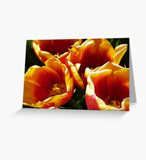 Tulip Time. 2 Greeting Card