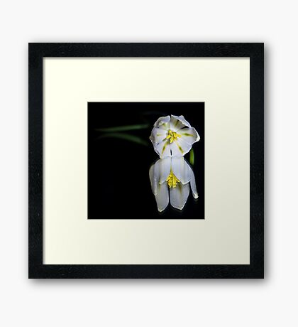 Peaceful Beauty 4 Framed Print