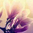 magnolia flower by aquaarte