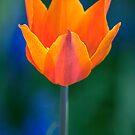 Spritz of Spring by Natalie  Cartz
