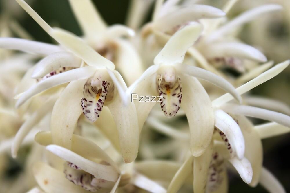 Beautiful orchid by Pzazz