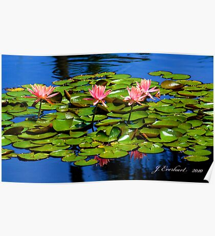 Pink Lillies on the Pond of Blue Poster