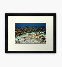 Many starfish underwater in a coral reef Framed Print