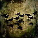 Seagulls by Carlos Restrepo
