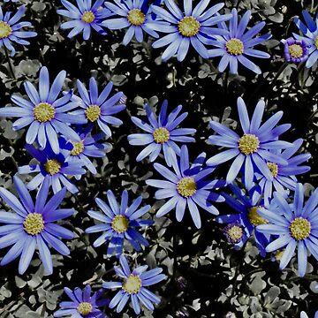 Dreams Of Blue Daisies by LyndaAnneArt