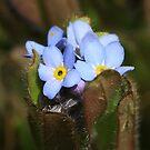 Forget Me Nots Springtime by Deborah  Benoit