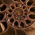 Ziemlich brauner Ammonit von JBlaminsky