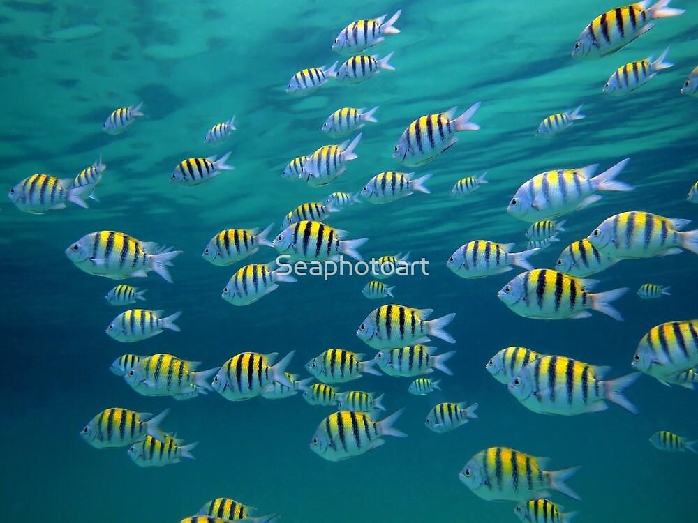 School of Sergeant-major fish near water surface by Dam - www.seaphotoart.com