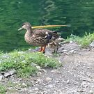 duck and duckling by shadowstar86