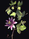 Passion Flower Vine by Barbara Wyeth
