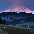 Dawn in the Orchards, Mt. Hood, Oregon by Albert Dickson
