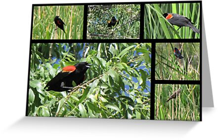 Red-winged Blackbird ~ Collage by Kimberly Chadwick