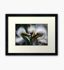 Baby Great White Egrets Framed Print