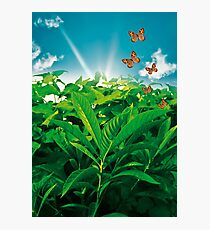 Nature Day Photographic Print