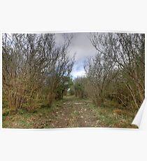 Burren Forest Path Poster