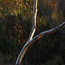 Catch the Light, Kalgoorlie West Australia by robynart