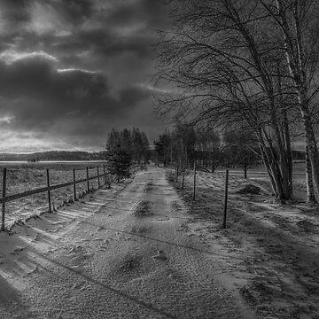 Winter Morning Light 7 by wekegene