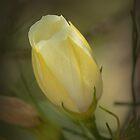 Gelbe Blütenknospe von Elaine Teague