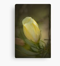 Yellow Flower Bud Canvas Print
