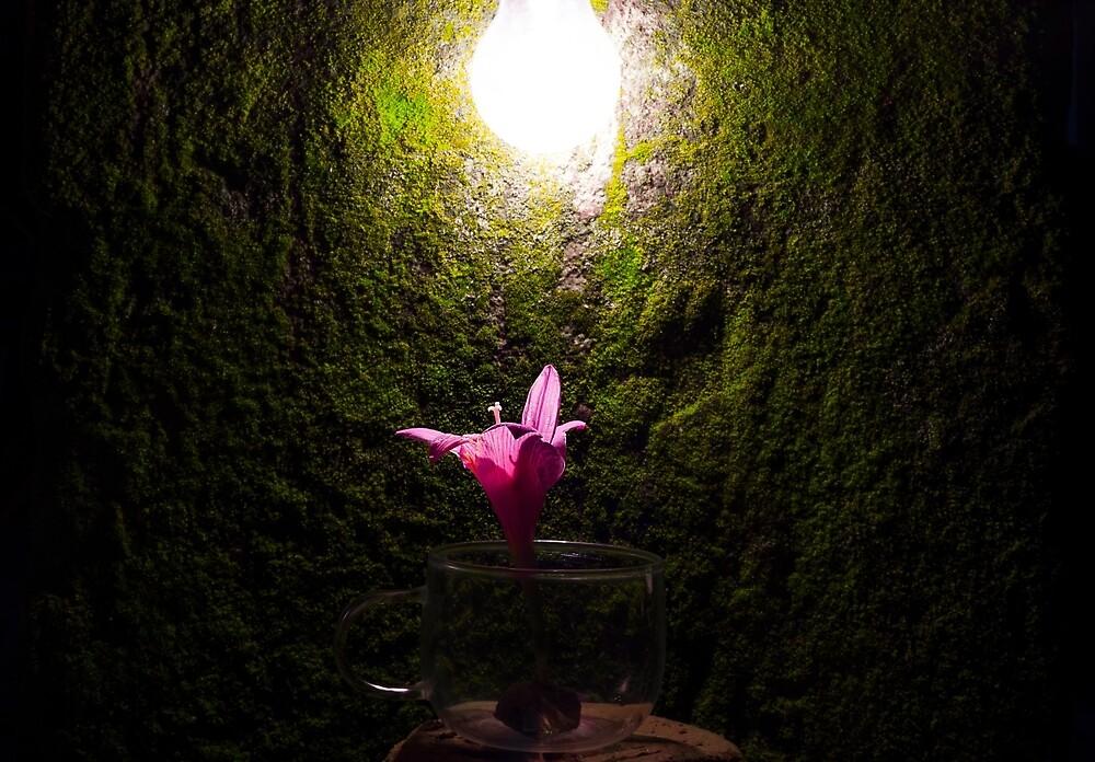 Glow by Priyesh