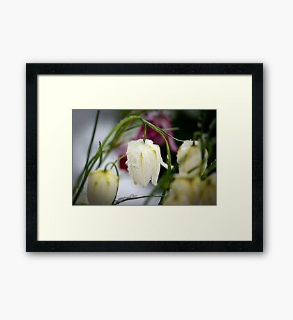 Belated April Fools' Day 2 Framed Print