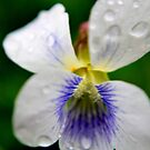 Rainy Day Violet II by Michelle BarlondSmith