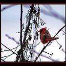 RED BEAK by BOLLA67