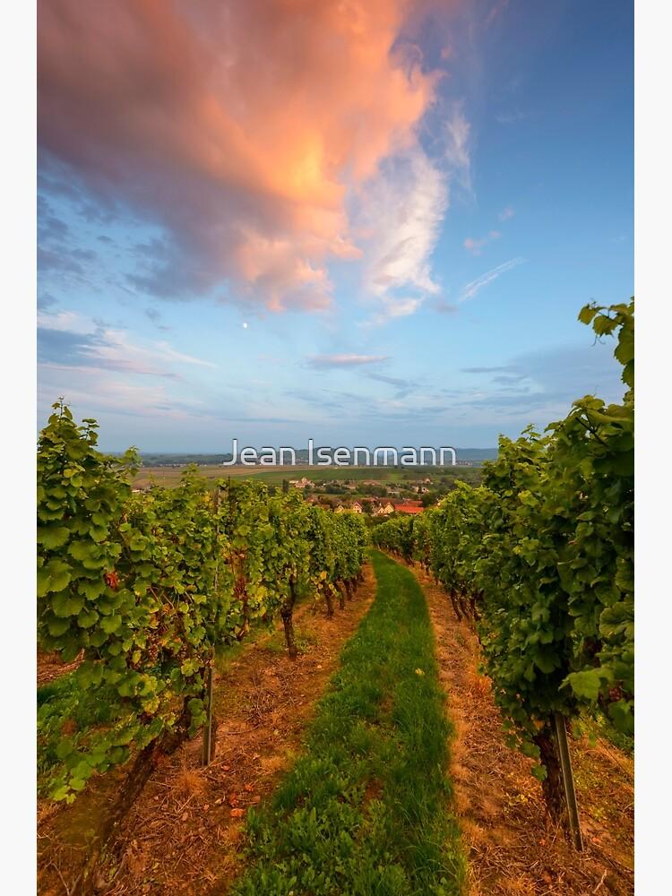 «Dans le vignoble de Wangen» par Isenmann