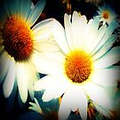 Wild Daisies  by EvePenman