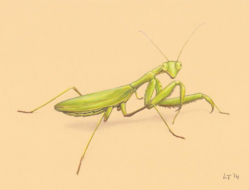 Praying Mantis by Lars Furtwaengler