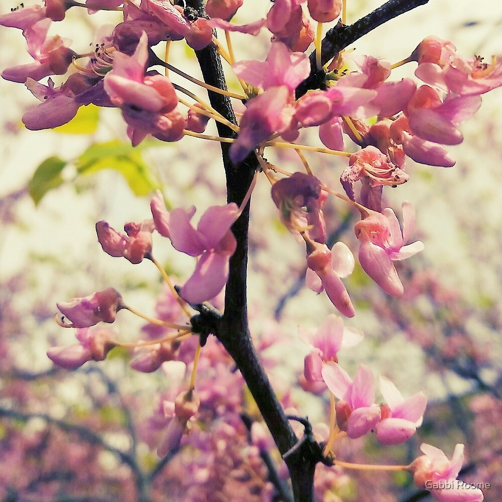 Spring Awakening  by Gabbi Roome