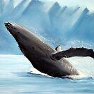 Humpback Whale by Mike  Segura