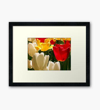 More Colors of Spring Framed Print