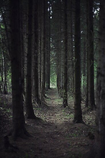 In the forest by MsDunwich