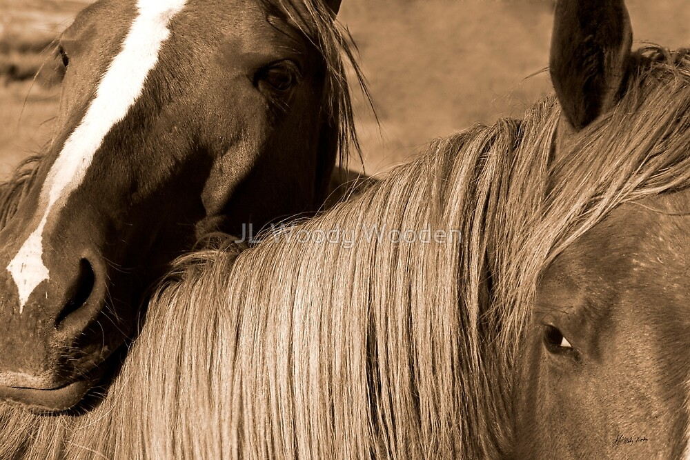 Young Colts by JL Woody Wooden