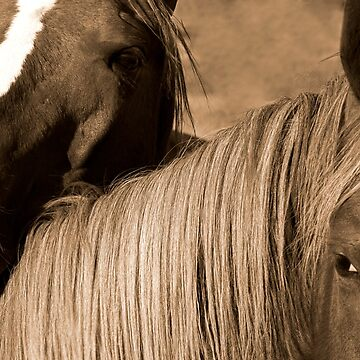 Young Colts by JLWoody15Wooden
