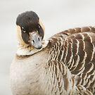 Hawaiian Goose by kernuak