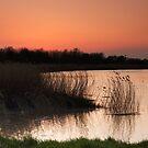Spring Sunset by kernuak
