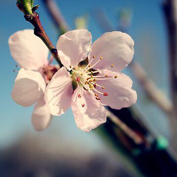 Blossums by lemon-oh
